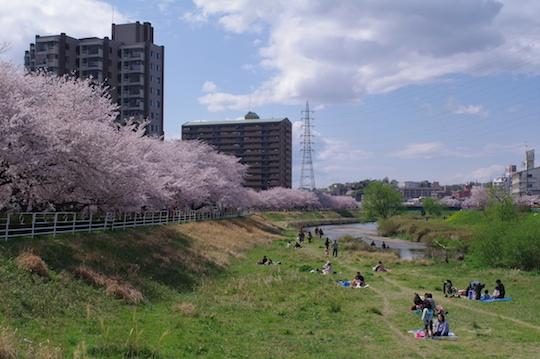 天白川の桜で楽しむ.jpg