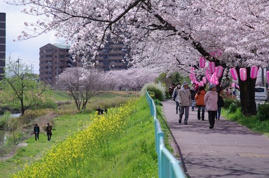 天白川の桜道散歩.jpg