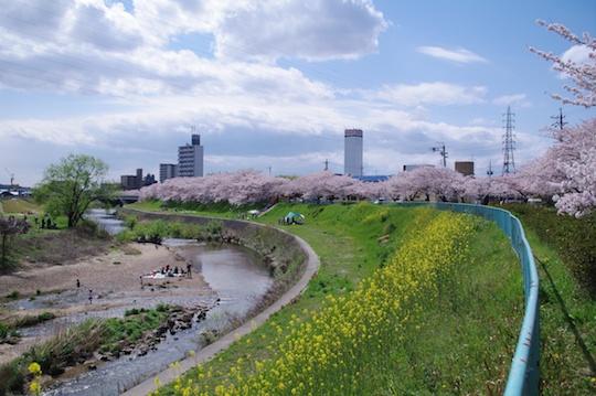 天白川桜堤.jpg