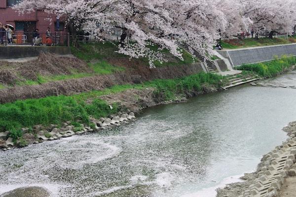 山崎川7.jpg