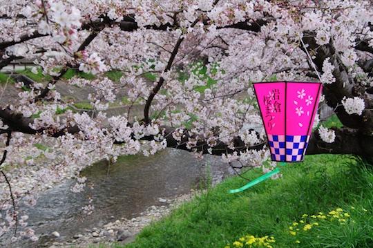 桜祭.jpg