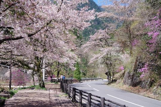 桜道.jpg