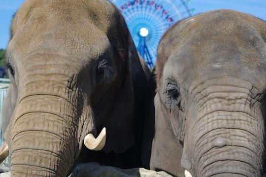象さん.jpg