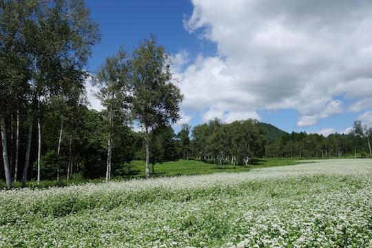 そば畑と雲.jpg
