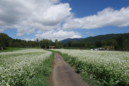 そば畑の道.jpg