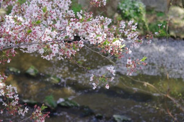 山崎川8.jpg