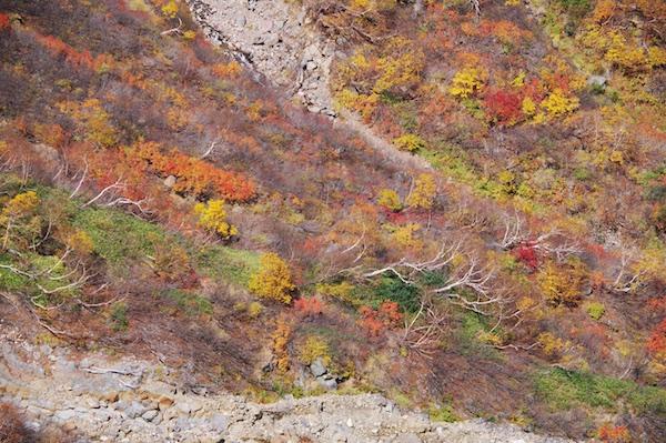 崖の下の紅葉.jpg
