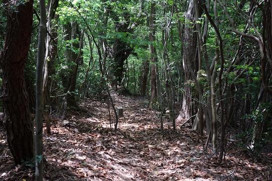 登山道下り1.jpg